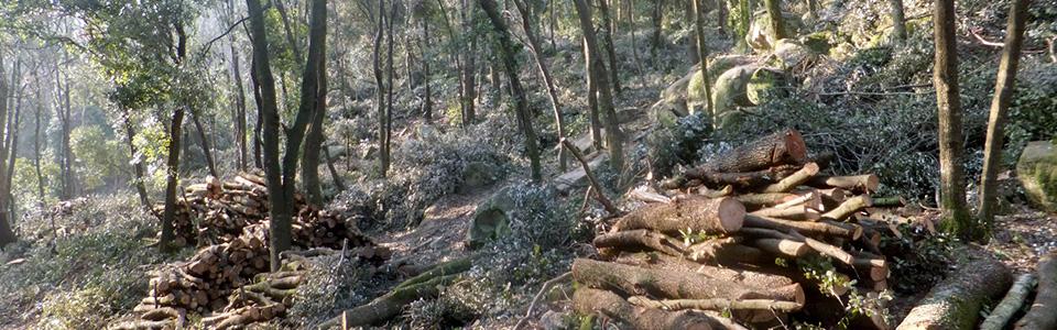 treballs-forestals