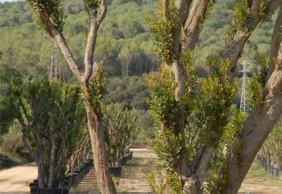 Parque de Arganzuela