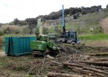 Aprofitament per a biomassa d'acàcies