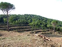 Finalitzen els treballs forestals a la rompuda de Cal Rei