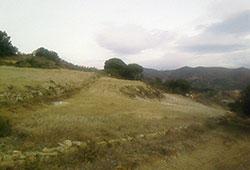 Rompuda forestal a Coll de Pomar (Tiana)