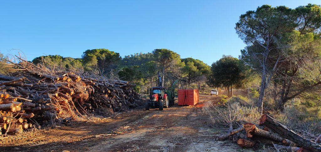 Estellat de la fusta per a biomassa a Can Cabanyes (Argentona)